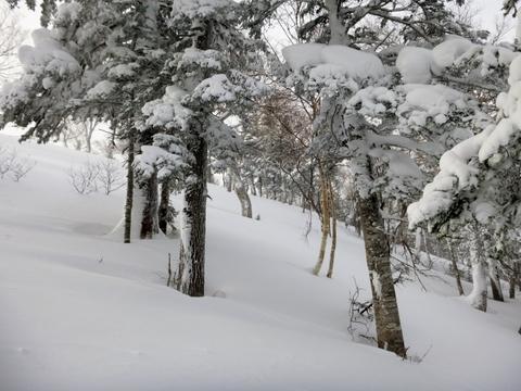 北大雪1.jpg
